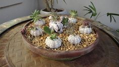 Take some shells and corals and put succulents in them for a beautiful display!