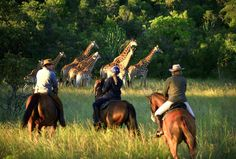 This horseback or jeep equestrian safari explores the Waterberg area of South Africa. Located in the Limpopo region, animals here include rhino, giraffe and eland, and Limpopo's malaria free status makes it a great place for safari touring. Family Adventure Holidays, Great Places, Places To Go, Riding Holiday, Game Lodge, Game Reserve, African Safari, Berg, Horse Riding