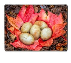 MSD Placemat Kitchen Table 15.8 x 12 x 0.2 inches Swan eggs in abandoned nest made of fallen red and yellow leaves autumn IMAGE ID 34241606 MSD http://www.amazon.com/dp/B00ZBDIK2G/ref=cm_sw_r_pi_dp_Sz11wb1PF9009