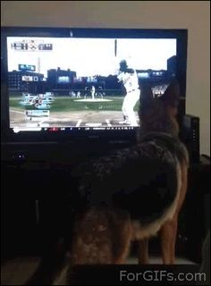 This dog whose anger over this pitch could not be stopped. | The 47 Absolute Greatest Dog GIFs Of 2013