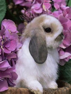 Cute Bunny in The Hydrangea Bush.