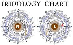 Iridology - *Can we get a larger/readable version of this pretty please ?? :)