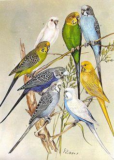 82672e374a Birds 1972 Encyclopedia Print - via Ninainflorida Cute Birds