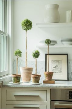 Topiary greenery for your kitchen: Indoor Garden, Indoor Plants, Home And Garden, Potted Garden, Ideas Hogar, Deco Floral, Diy Décoration, Myrtle, Houseplants