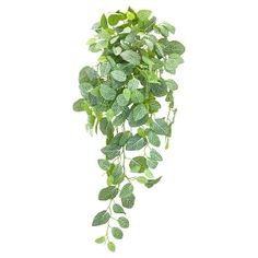 Cascading Fittonia Foliage, 33'' Succulent Hanging Planter, Hanging Planters, Japanese Bamboo, Green Plants, Cacti And Succulents, Artificial Plants, Houseplants, Greenery, Decoration