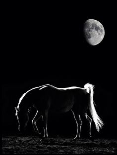 horse in the moonlight..