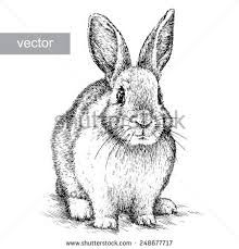 Image result for white rabbit drawing