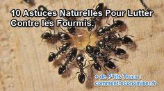 10 astuces pour lutter contre les fourmis