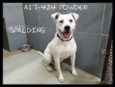 Last Chance Pets « Spalding County Animal Shelter