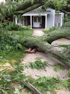 "A friend had a tree blow down yesterday, so she got creative. ""I'll get you my pretty & your little dog too!"""