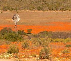 Most Beautiful Places Of The World – Namaqualand - South Africa Beautiful Sites, Beautiful Places In The World, Most Beautiful, Beautiful Scenery, Spring Flowering Bulbs, Of Wallpaper, Amazing Nature, Continents, West Coast