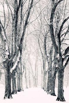 A winter pathway   Image via  flickr.com