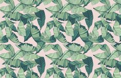 Pink and Green Tropical Leaf Wallpaper