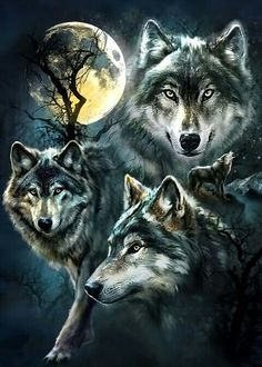 Collage of wolves at night