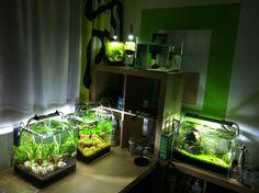 Aqua-Ecke #planted tank #aquascaping #biconeo