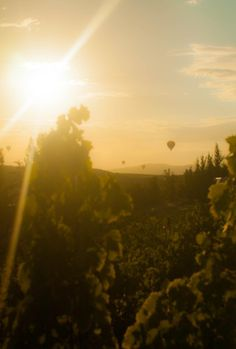 Flying high over the vines, Temecula Valley, CA