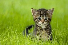 kitten pose, tall grass