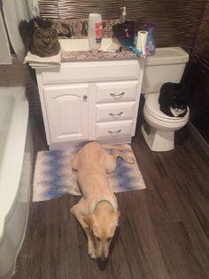 Finally got a photo of my entire fur family watching me shower http://ift.tt/2gVkD2u
