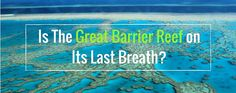 Is the Great Barrier Reef on its last breath? Marine Conservation, Great Barrier Reef, Science Projects, Marine Life, Natural Wonders, Wonders Of The World, Breathe, Blog, Blogging