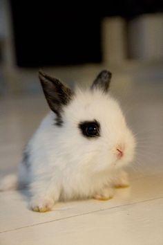 Tiny lil bunny