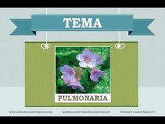 Beneficios, nutrientes y propiedades de la pulmonaria. Más información en: http://www.remediocaseronatural.com/comidas-sanas-beneficios-pulmonaria.htm