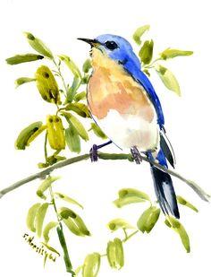 Eastern Bluebird, Original watercolor painting, Bird watching, bird watching gift birds, bird art, bird painting, bluebird artwork, birds by ORIGINALONLY on Etsy