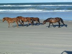 Escape to North Carolina's Outer Banks for golf, wild horses and the sea from World Golf