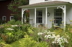 Volcano White phlox in front of white farmhouse