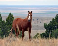 Tippy is a gelding on the South Steens.
