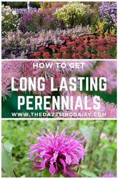 Growing perennials long lasting (and blooming!) perennials is easy!   Gardening, Gardening Tips, Gardening Hacks, Gardening 101, Garden, Perennials, How to Grow Perennials