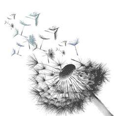 Dandelion Drawing, Dandelion Tattoo Design, White Dandelion, Dandelion Flower, Tatoo Dog, Frame Floral, Tattoos Familie, Black And White Art Drawing, Flower Graphic Design