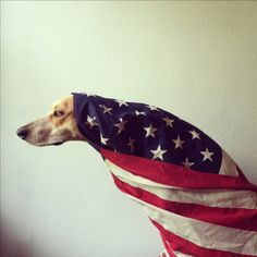 Maddie in an American Flag.