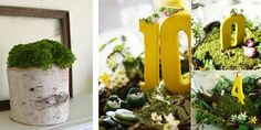 Bridal Buzz: Mossy Centerpieces