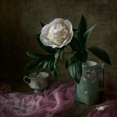 another beautiful photographic still life by Elena Kolesneva. She gets that wonderful quality of light which makes you do a double take with her work. is it a painting or a photograph? This is a peony, or Paeonia. Double Take, Still Life, Peonies, Photo Art, Make It Yourself, Plants, How To Make, Painting, Beautiful