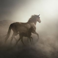 Photo horse by mehmet ilhan on 500px
