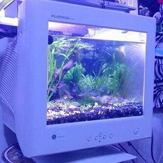 [if Uzuri was allowed to keep pet fish without submerging them in glitter this may be what the tank would be like]