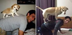 Funny pictures about Before And After Pictures Of Animals Growing Up. Oh, and cool pics about Before And After Pictures Of Animals Growing Up. Also, Before And After Pictures Of Animals Growing Up. Baby Animals, Funny Animals, Cute Animals, Funny Dogs, Animal Pictures, Cute Pictures, Photo Glamour, Son Chat, Before And After Pictures