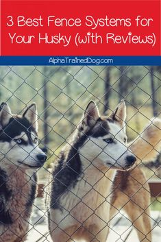 Top 3 Best Dog Fences for Huskies (With Full Reviews) - Alpha Trained Dog Invisible Fence, Pet Barrier, A Husky, Best Dog Training, Pet Fashion, Dog Fence, Best Dogs, Your Pet, Dog Lovers