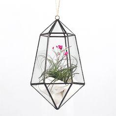 Amazon.com: Modern Hanging Artistic Clear Glass Geometric Terrarium Six-surfaces Diamond Succulent Fern Moss Plant Terrarium Bonsai Flower Pot 4.3 x 5.1 x 9 inches: Kitchen & Dining