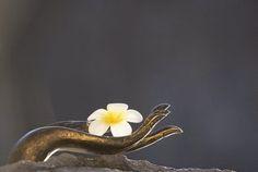 EQUILÍBRIO: Cada um colhe, Buda