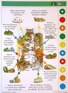 Soubor Logico Piccolo - Prvouka Domácí a lesní zvířata Soubor obsahuje 16 hracích karet, vždy s 10 úkoly. Karta se zasune do rámečku a barevné knoflíky se přisouvají ke správné Brain Activities, Teaching Science, English Vocabulary, Multiplication, Projects For Kids, Montessori, Animal, Drawings, Cousins