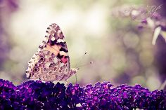 ~What the caterpillar calls the end of the world, the master calls a butterfly~    ~Richard Bach~