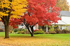 Get ready to transition from summer with our fall lawn care tips! Pick up everything you need from fall plants to fertilizers and we'll help you get your lawn and garden ready before the first frost. Deciduous Trees, Trees And Shrubs, Trees To Plant, Picture Tree, Photo Tree, Fall Lawn Care, Arbor Day Foundation, Pergola Pictures, Arbour Day