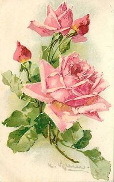 Les roses de C. Klein - Photo de Les roses de C. Klein (peintre) (Cartes postales anciennes) - Mon jardin de roses anciennes