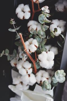 Eucalyptus and cotton plant Dried Flowers, Beautiful Flowers, White Flowers, Cotton Plant, Photo Deco, Flower Aesthetic, Jolie Photo, House Plants, Flower Pots