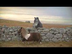 """Pony que hace el paso """"moonwalk"""" es un éxito en YouTube #Video - Cachicha.com"""