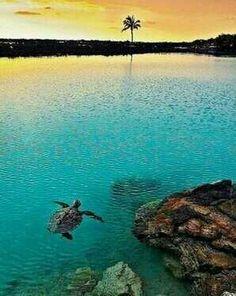 Big Island...Big love