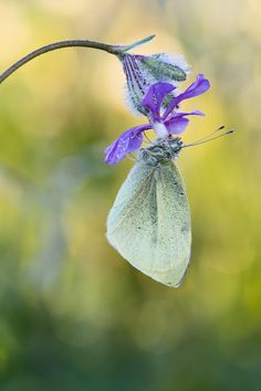 Butterfly by Jose Maria Luna Anillo