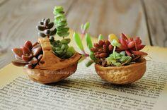 walnut planters