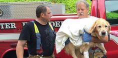 Héroïque : un chien guide d'aveugle se jette devant un minibus pour sauver sa maîtresse